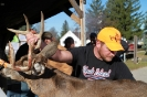2012 Mancelona Buck Pole_386