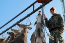 2012 Mancelona Buck Pole_86